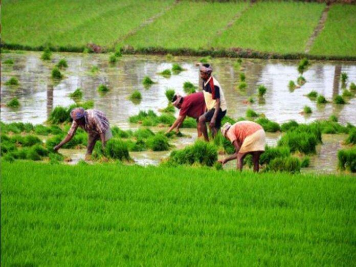 अजित पवारांच्या 'त्या' घोषणेची अंमलबजावणी होणार; शेतकऱ्यांना मोठा दिलासा