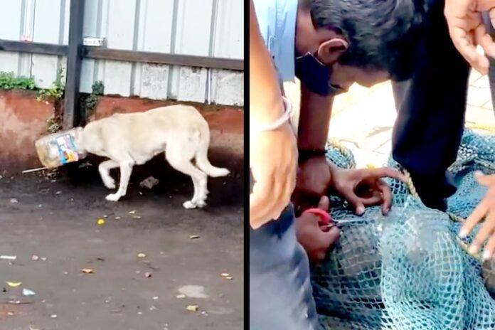 प्लास्टिकच्या डब्यात कुत्र्याचं तोंड अडकलं, अग्निशमन दलाच्या जवानांनी असं सोडवलं, VIDEO   Viral