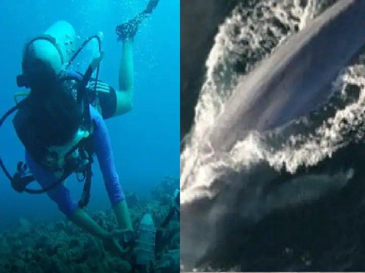 Blue Whales | देवमासा गाणं गातो! चकित झालात ना? पण हे खरंय, पुराव्यानिशी सिद्ध झालंय